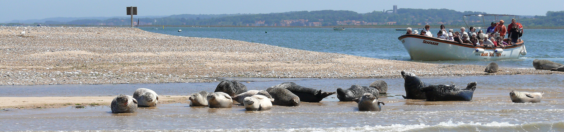 Beans Boats and seals at Blakeney Point